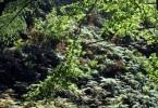 Bäume in Schlucht