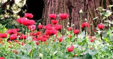 Tulpen im botaniscchen Garten