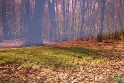 Wald mystisch