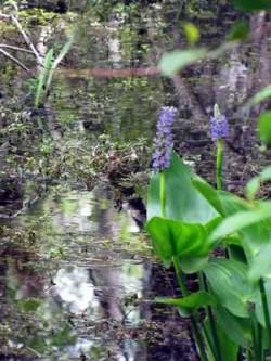 1_Blumen_Wasser_Florida