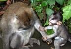 Affe mit Affenkind