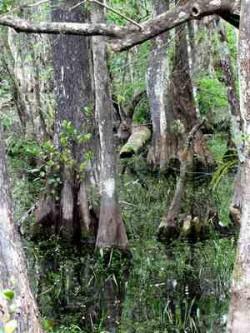 3_Baeume_Florida