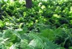 Farne im Botanischen Garten