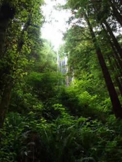 Mt_Shasta_300_bei_den_Red_Woods_RW_P1010345