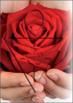 Rose_Kreuz