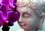 Buddha vor Orchidee