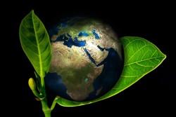 Erde im Blatt