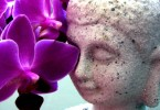 Buddha mit Orchidee