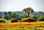 Entwaldung in Brasilien