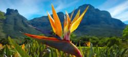 Kirstenbosch Gardent