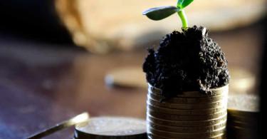 Geld, Münzen, Pflanze