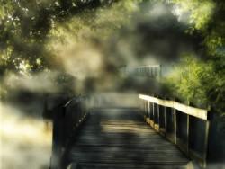Holz im Wald bei Nebel und Sonne