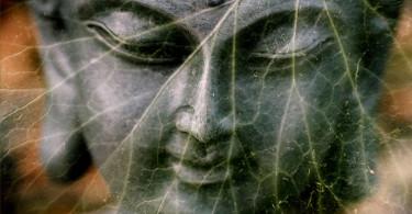 Blatt-doppelt-buddha