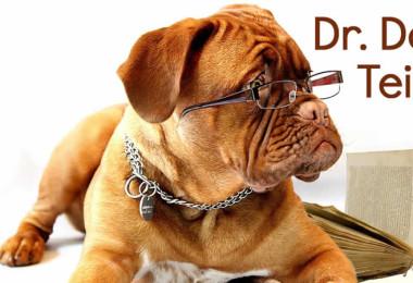Hund-Brille