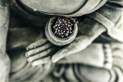 Buddha - Rose