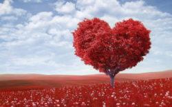 herz-Baum-heart-shape