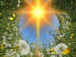 pusteblumen-mit-sonne-dandelions