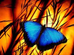 schmetterling-sonne-butterfly