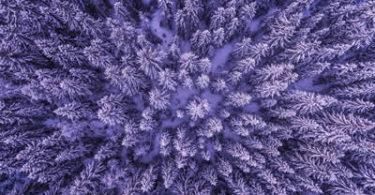 Baeume-gefroren-perspektive-frozen