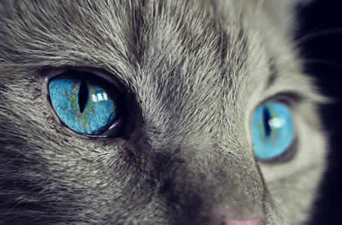 katze-auge-cat