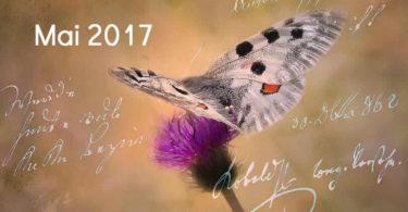 Mai-schmetterling-tagebuch-butterfly