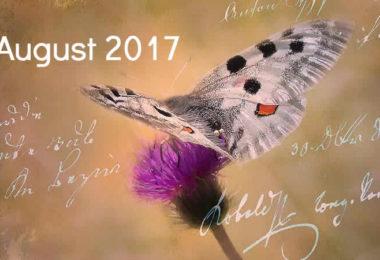 August-schmetterling-tagebuch-butterfly