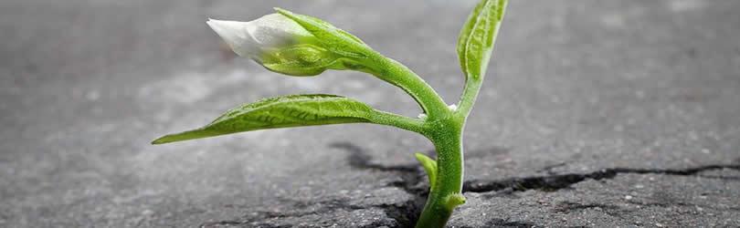 asphalt-sprosse-aufstieg-sprout