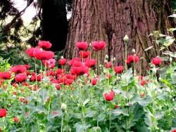 Verantwortung und Selbstwertgefühl Botan Garten