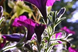 Chakren Erklärung Blumen