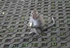 Affe mit Banane