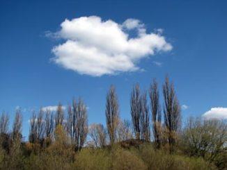 Baumgruppe mit Wolken