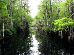 Naturheilkunde Flusslauf