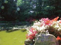 Blumen am Wasserspiel