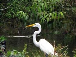 Goldene Regel längst vergessen Florida und seine Vögel