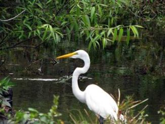 Florida und seine Vögel
