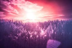 Aufgestiegene Meister gras violett