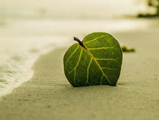 grünes Blatt, das am Strand im Sand steckt