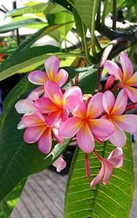 Mystik und Gnostik religiöses Geheimwissen Blumen