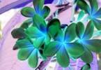 Blumen invers