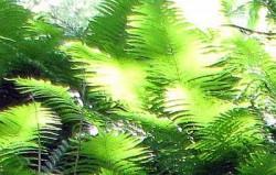 Der Ort des Bösen ist der Mensch 7 Botan Garten 5 2012
