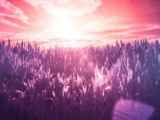 gras-violett-sonne-licht-infrared