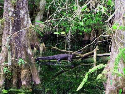 9_Kroko_Florida
