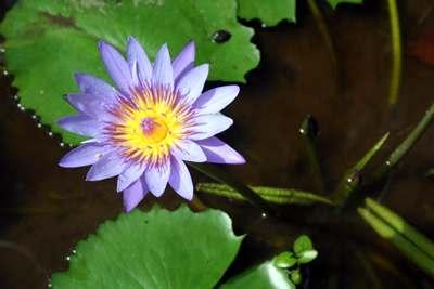 Blumen_4_A_Sommer_2010