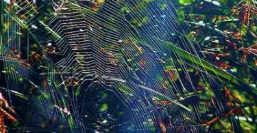 Spinnennetz im Sonnenlicht