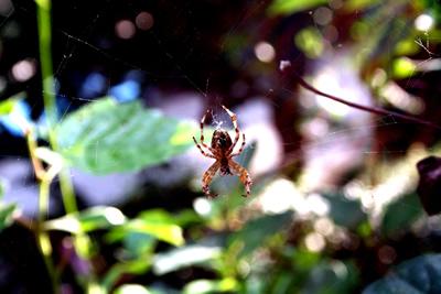 Spinne im Sonnenlicht