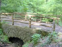 Hoffnung bewahren Brücke im Wald