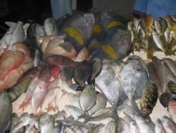 Vitamin B2-Fische auf Markt