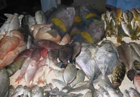 Fische auf Markt