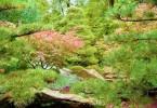 Männer in Beziehungen-botanischer Garten
