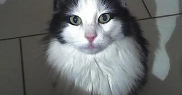 Katze Gila Benz